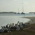 Lo scheletro di un delfino e, sullo sfondo le barche all'ancora.
