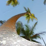 Questa palma dev'essere alta oltre 20 metri!
