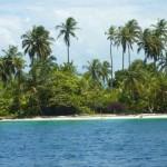 """Scorcio di un'isola deserta. La vegetazione è impenetrabile e le """"citras"""" vi fanno da padrone!"""
